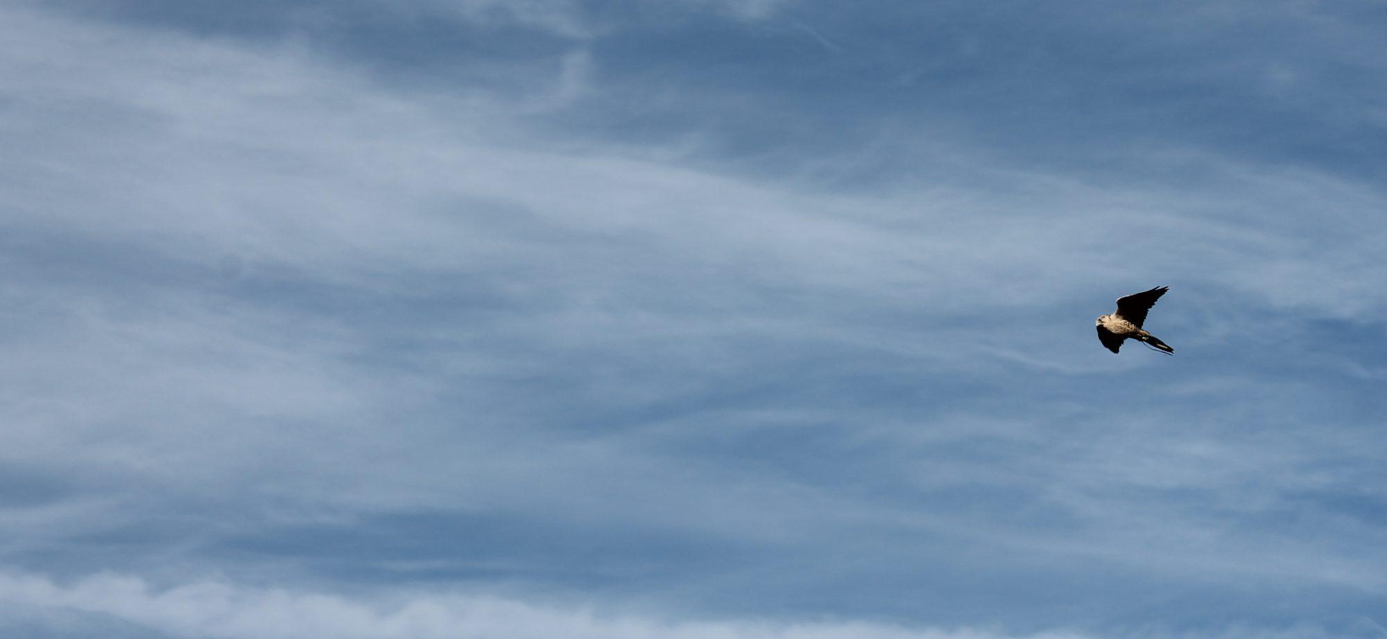 Association Québécoise des Fauconniers et Autoursiers